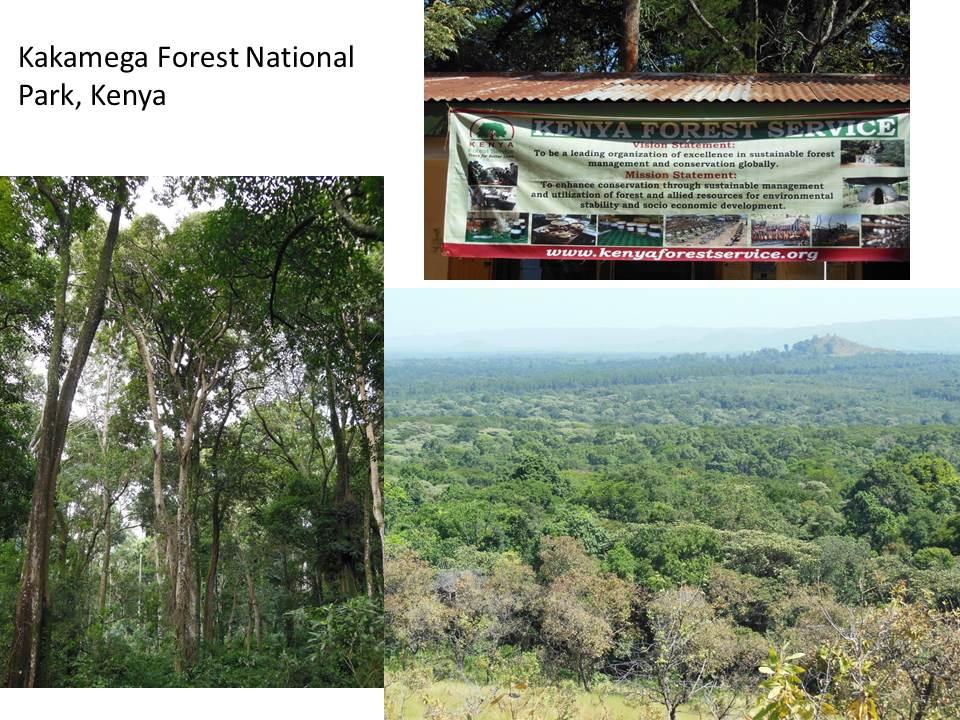 Tropical Highland Forest Highland Forest at Kakamega