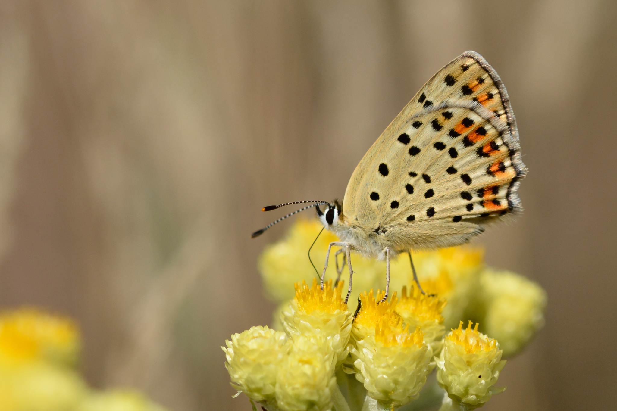 Nitrogen enrichment in host plants increases the mortality of common Lepidoptera species