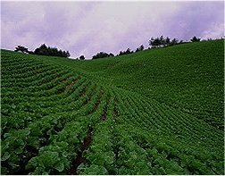 South Korea Cultivation of crops on steep slopes in Korea