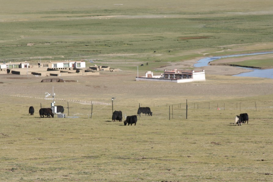 Tibet_Kema_yak