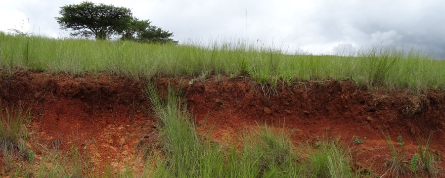 soil profile red