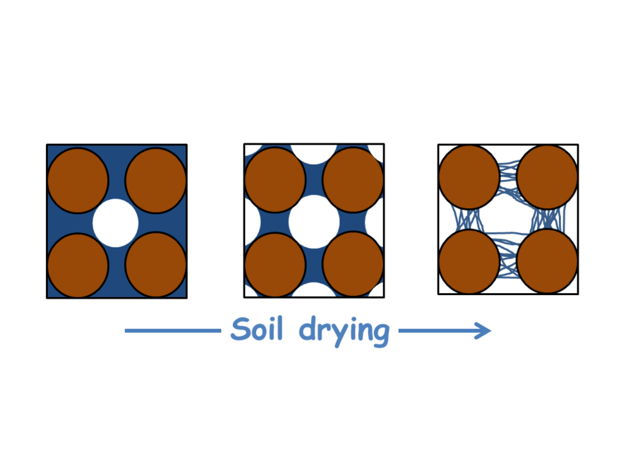 Rhizosphere drying - Concept